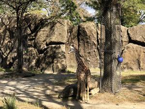 フィラデルフィア動物園-2