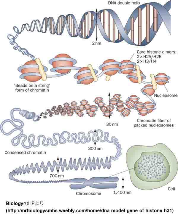 タウはAβより多くの染色体構造を変化させる