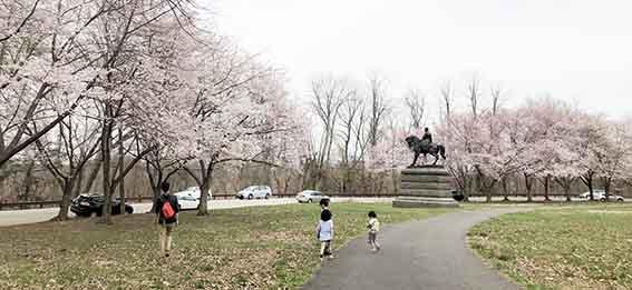 公園内の桜達