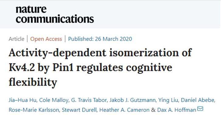 認知の柔軟性を上げる遺伝子変異
