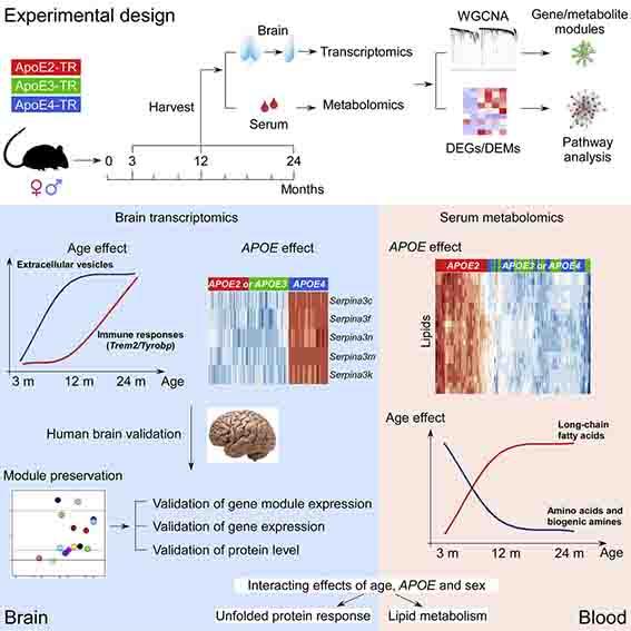Neuron-2020-AD-risk