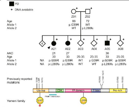 FBXO7のヘテロ変異の組み合わせで家族性若年性PD発症