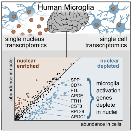 Single Nucleus RNA-Seq