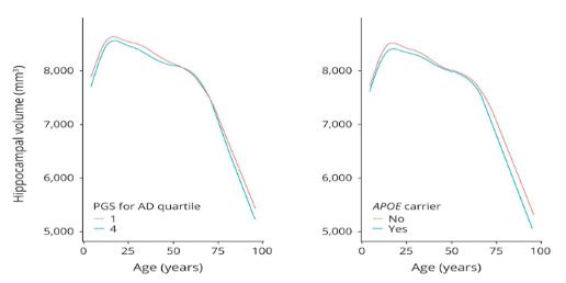 ADのリスク多型と海馬体積