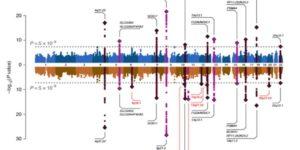 脳動脈瘤のリスク遺伝子