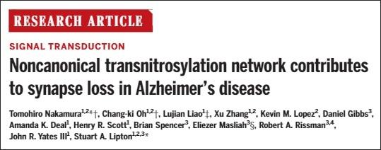 Noncanonical transnitrosylation network contributes to synapse loss in AD