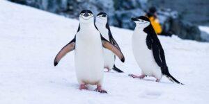 南極大陸旅行計画