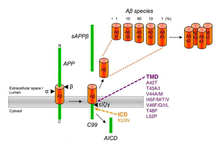 Perdical validatoin img1