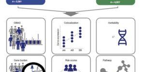 Lewy body dementia (LBD) のGWAS解析:ADとPDに共通のリスク遺伝子