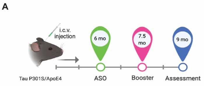 Apolipoprotein-img1