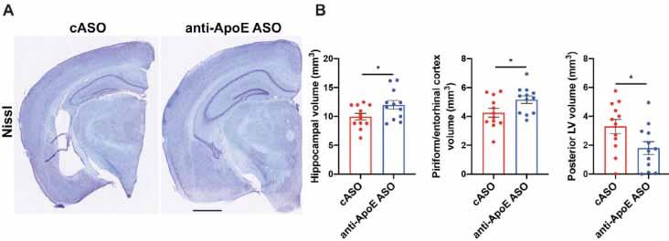 Apolipoprotein img3