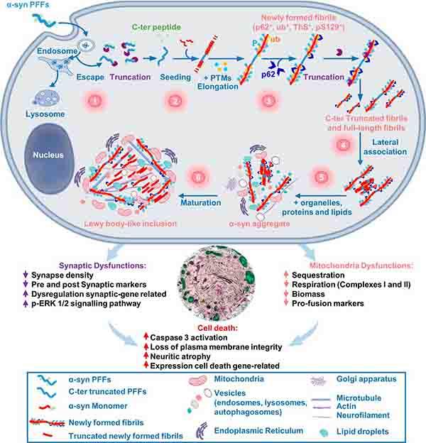PNAS-2020-Lewy-organelles