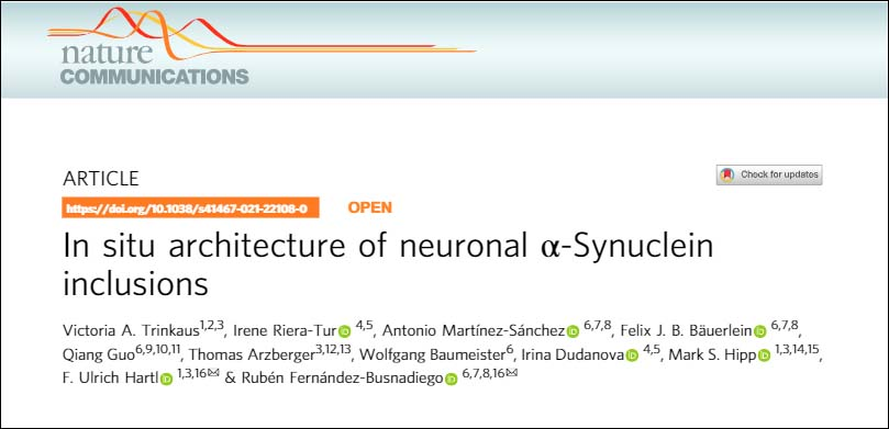 In situ architecture of neuronal α-Synuclein inclusions