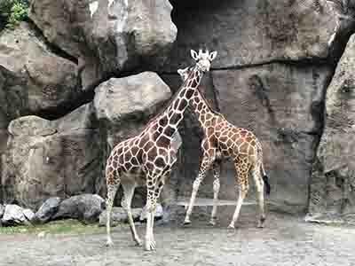 フィラデルフィア動物園 2021