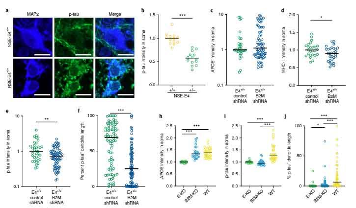 nat-neurosci-neuronal-apoe-mhcI-3