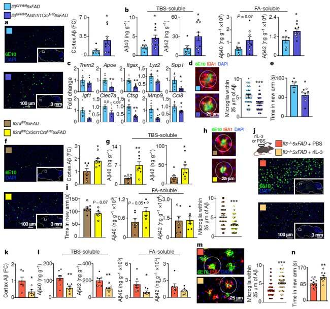 astrocytic-IL3-microglia-AD-1