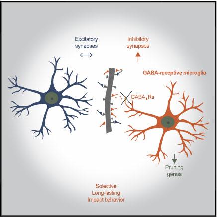 cell-2021-GABA-microglia-eyecatch