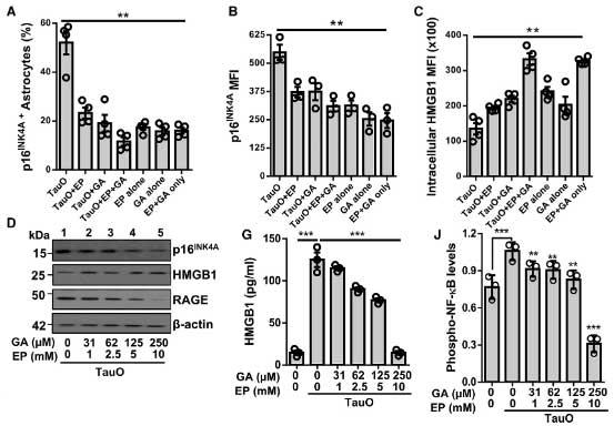 cell-rep-2021-tau-HMGB1-senescence-3