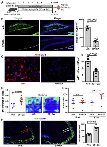 cell-rep-2021-tau-HMGB1-senescence-4