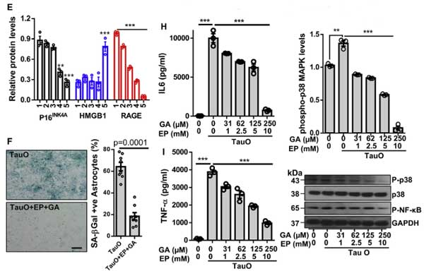 cell-rep-2021-tau-HMGB1-senescence-6